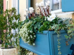 Best Cheap Large Outdoor Planters