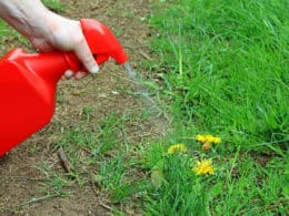 Best Pet Friendly & Safe Weed Killer