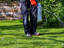 Best Weed and Grass Killer