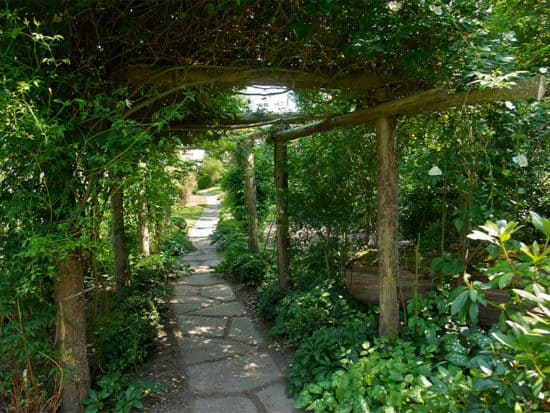 A Shady Garden Filled With All Types of Plants and Trees