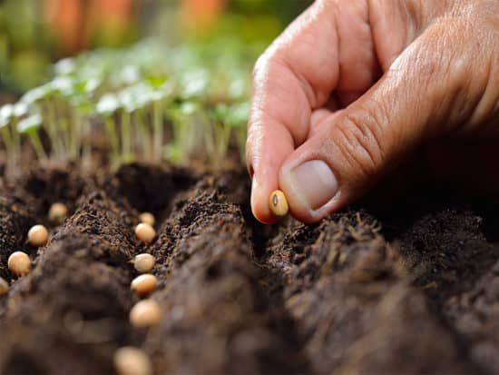Farmers hand planting seed soil