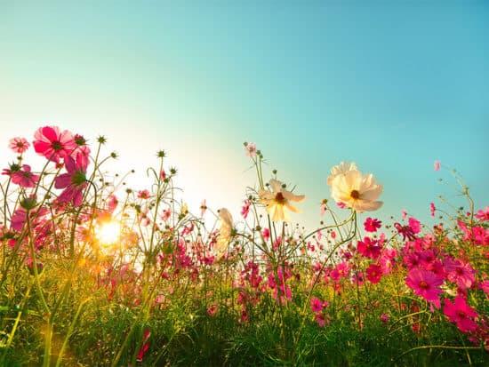 Flowers blooming garden