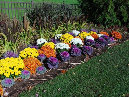 Fun flower bed design