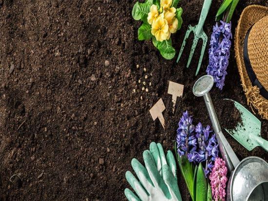 Gardening tools hyacinth flowers watering