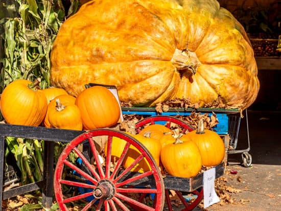 Giant Pumpkin Sits Market