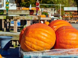 Giant Pumpkin Best Tips
