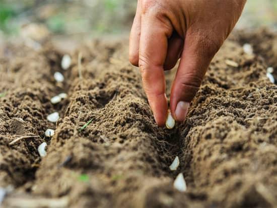 Hand planting pumpkin