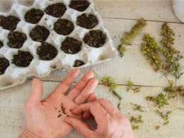 Make seeds germinate