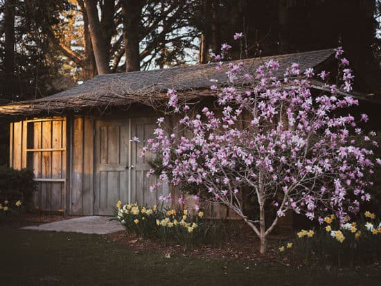 Small Wooden Hous Blooming Magnolia Tree