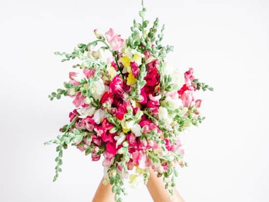 Snapdragon flowers bouquet