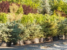 Trees to grow in your garden for decoration