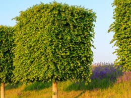 Wonderful Trees for Small Gardens