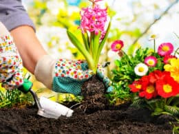Best Weed Killers for Flower Beds