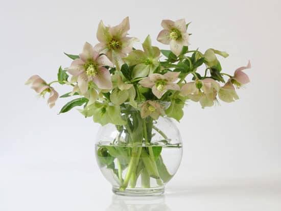 Bouquet spring hellebore flowers