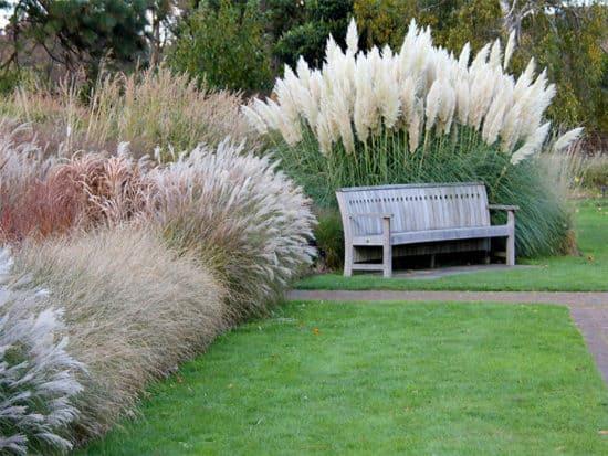 Various grasses pampas