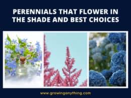 Perennials That Flower