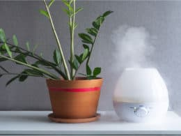 Best Plant Humidifier