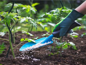 Best Fertilizers Tomatoes And Peppers