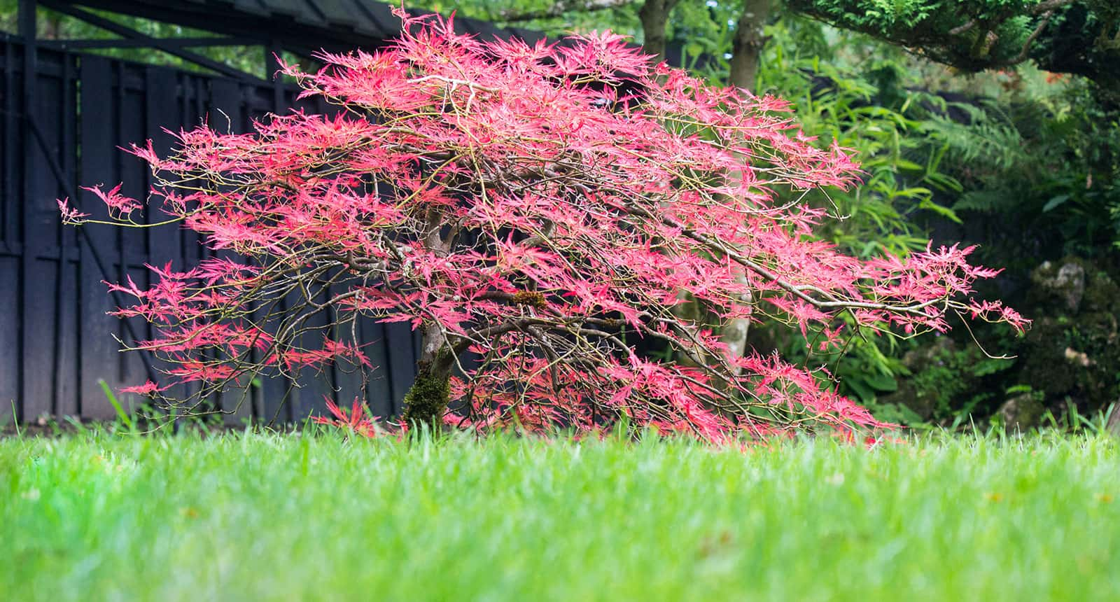 Maple Tree View