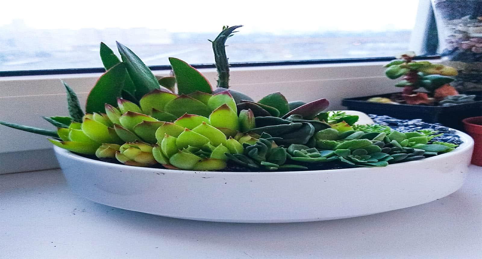 Succulent Terrarium White Ceramic