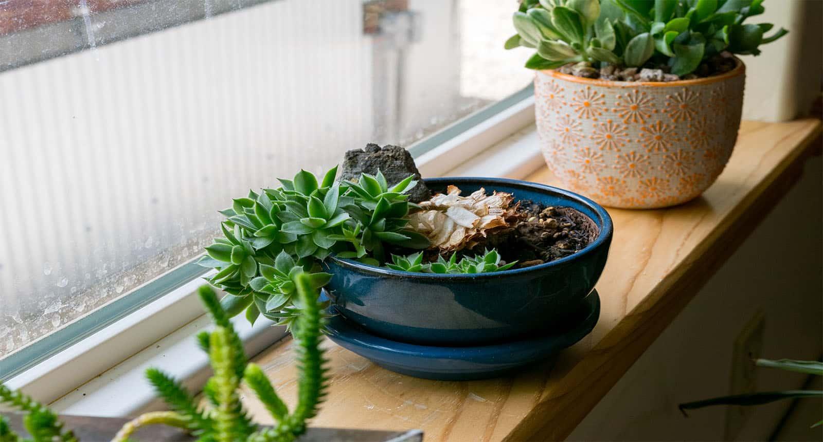 Various Succulent Plants